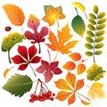 Autumn Leaves Teaser