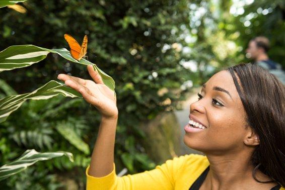 Butterfly-Conservatory-6.jpg