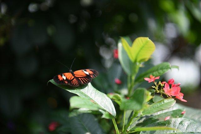 Butterfly-Conservatory-DSC_0834.jpg