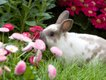 A Real Bunny at the Botanical Gardens