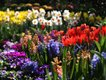 Spring Flowers at the Botanical Gardens