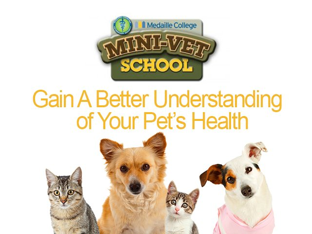 Mini Vet School Header
