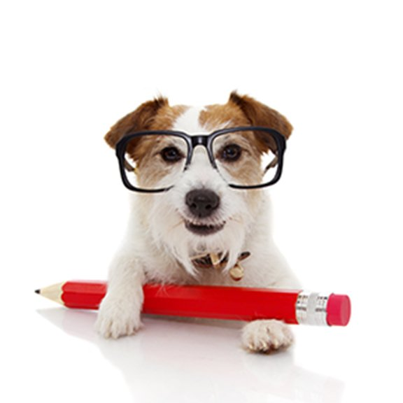 Dog with Glasses & Pencil