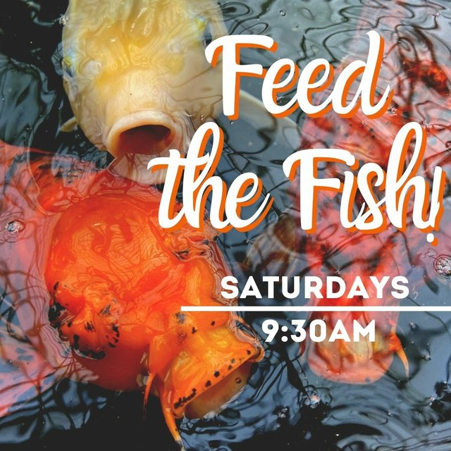 Feed the Fish-Graphic.jpg