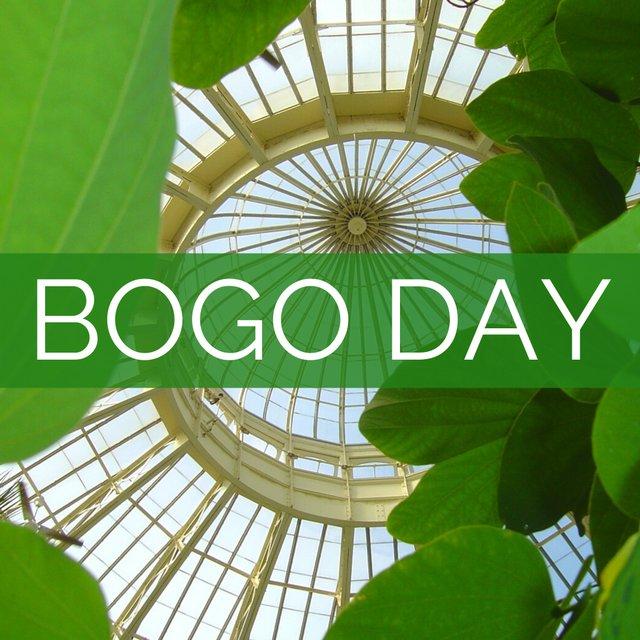 BOGO DAY!.jpg
