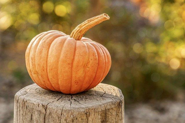 Lancaster Library Pumpkin Scavenger Hunt