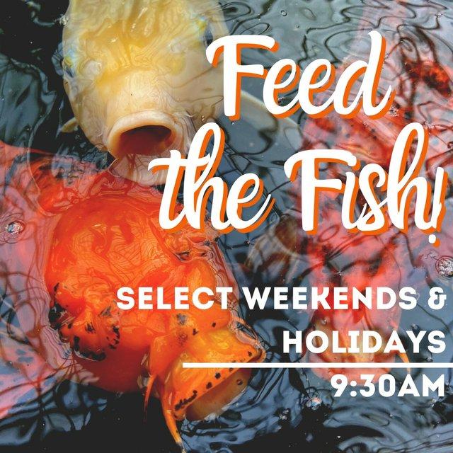 Feed the Fish-Select Wkns-Holidays.jpg