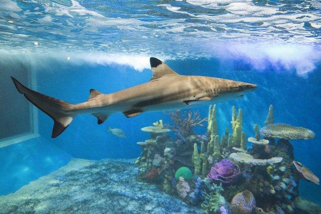 Shark at Aquarium of Niagara