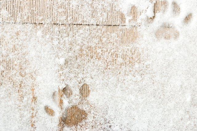 Footprints in Snow.jpg