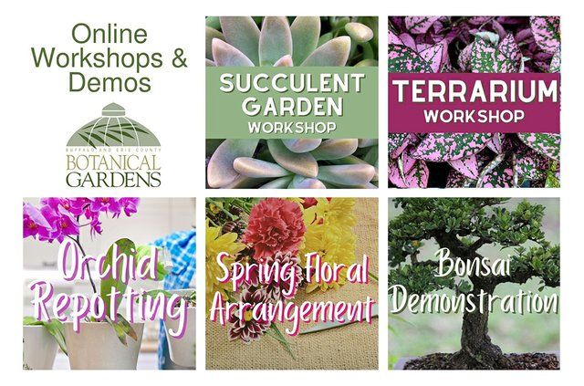 Botanical Gardens Workshops & Demos