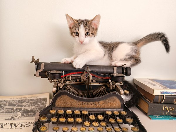 hemingwaycat.jpg