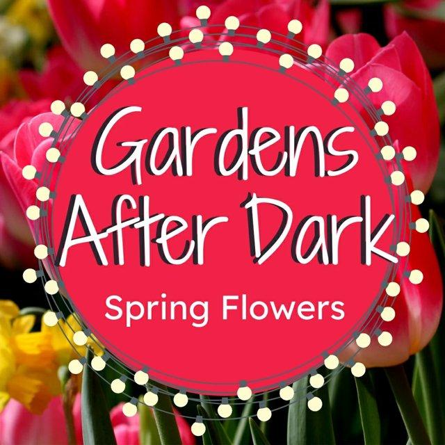 GardensAfterDarkSpringFlowersWebsiteBanner_1024x1024.jpg