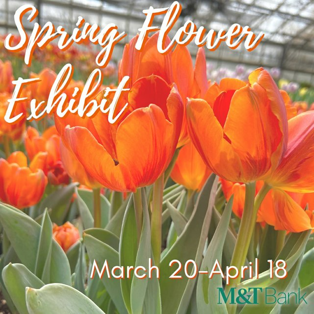 Spring Flower Graphic.jpg