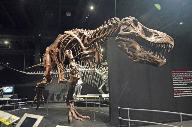 COSIdinasaur.jpg