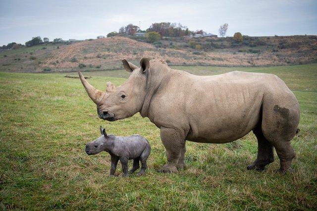 Rhino_baby.jpg