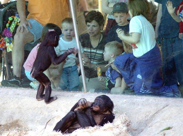 Zoo-kids-w-bonobos.jpg
