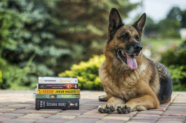 Read to a Dog.jpg