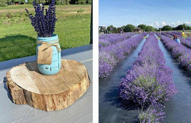 Lavender-2.jpg