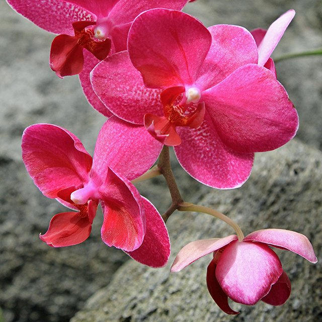 Orchid Teaser