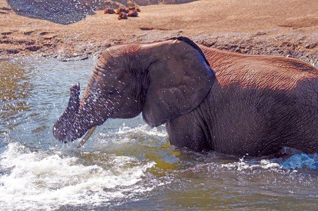 elephantbath_CMYK.jpg